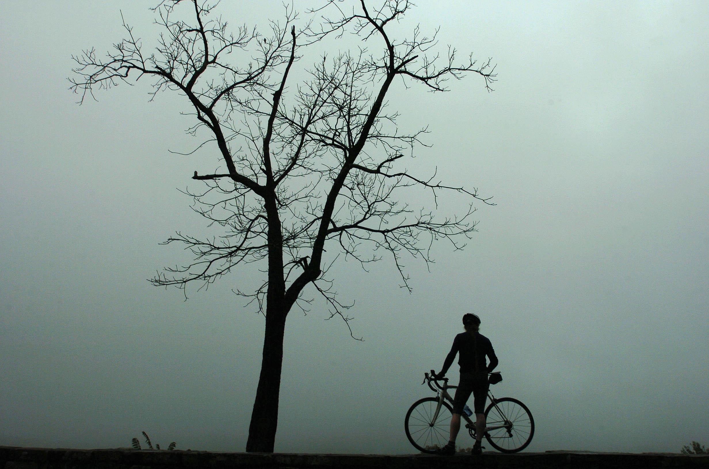Mountain Mist Rider